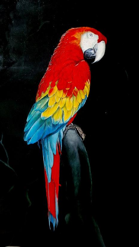 Red parrot.JPG