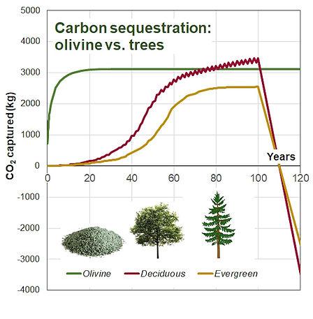 olivine%20vs%20trees_edited.jpg