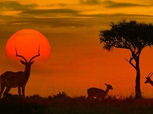 Kruger-National-Park-©-ShutterstockByeli