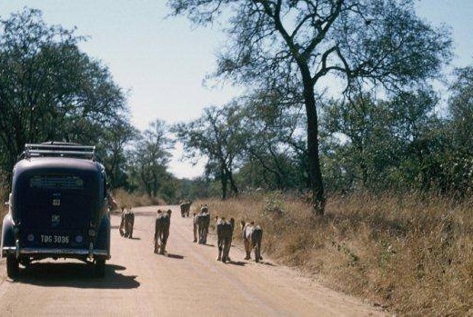 KNP-1950s