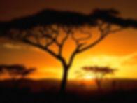 Africa-Desktop-Wallpaper-Tree.jpg