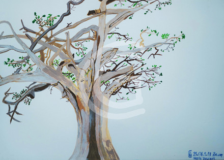 Elefantenfußbaum Äthiopien