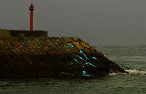 海の鼓動 - 日中のシーン