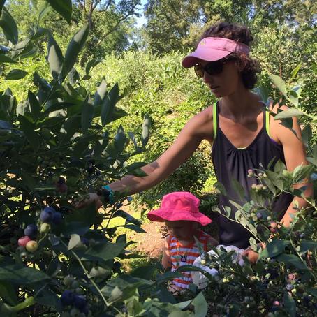 Blueberries for days