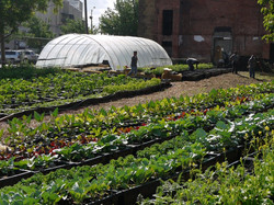 Lincoln Park Community Garden
