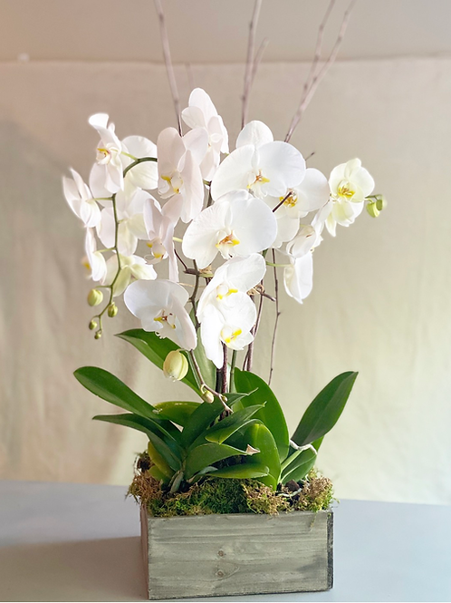Orchid arrangement (3 stems)