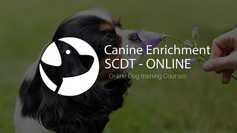 Canine enrichment.jpg