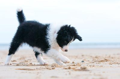 Puppy Training Classes
