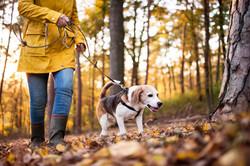senior-woman-with-dog-on-a-walk-in-an-au