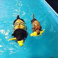 splash houndss.jpg