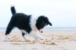 essential puppy