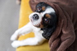 portrait-of-a-cute-dog-looking-up-6RYG58