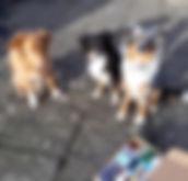 treat box 3dog.jpg
