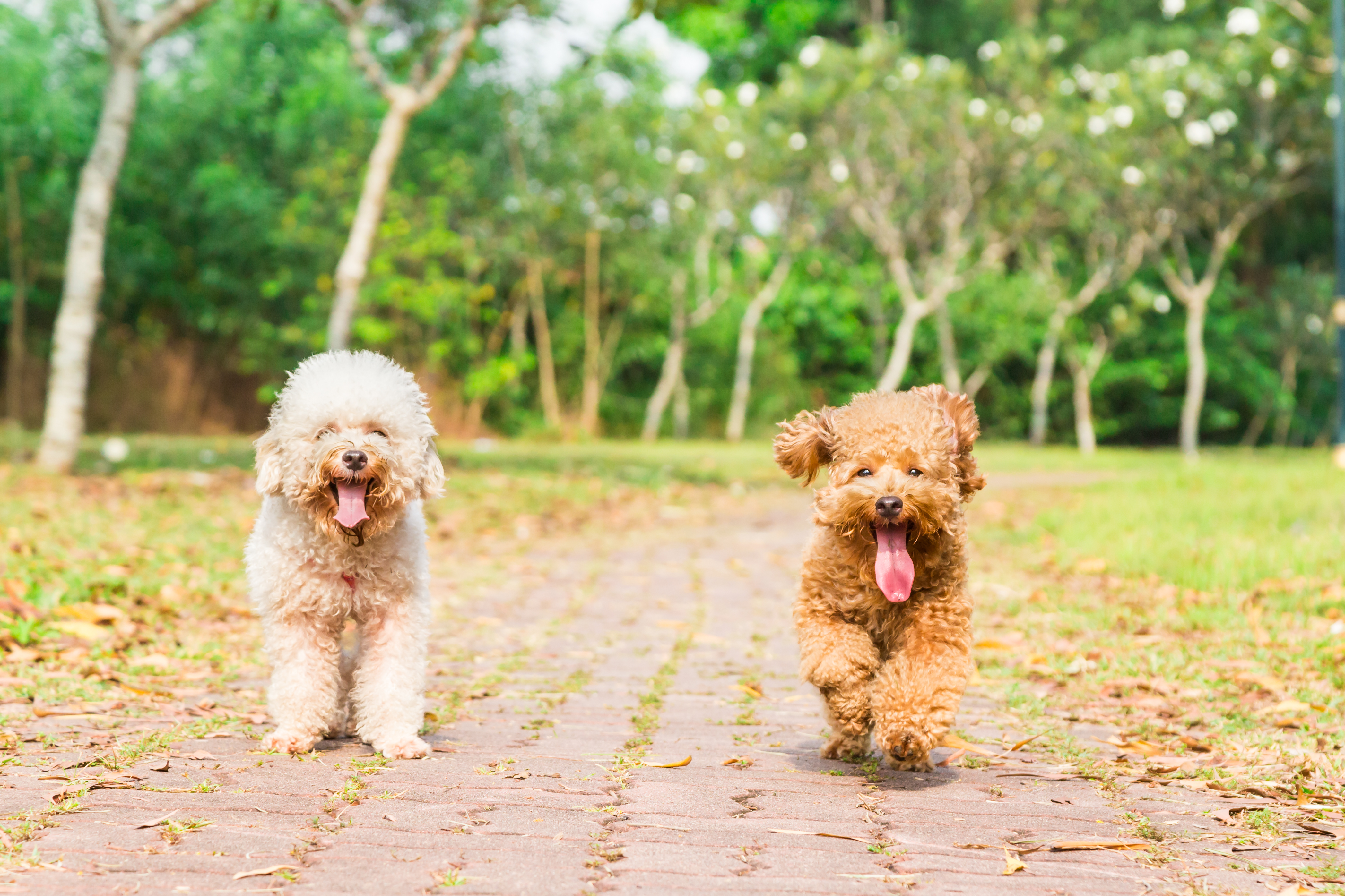 tired-dogs-with-long-tongue-resting-afte
