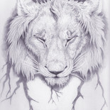 lionningFA.jpg