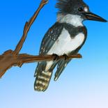 fantillus-sketchbook-kingfisher-FA.png