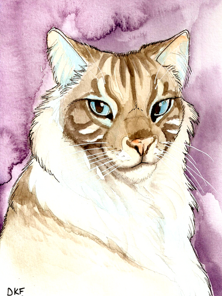 Portrait of Bubz the Blue Lynx Ragdoll