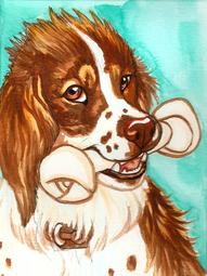 Portrait of Willie the Springer Spaniel Dog