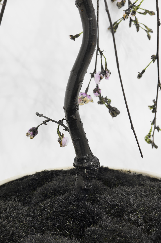Tide–Inked Spring