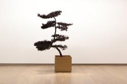 Inked Cypress