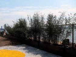 Inked Garden for Pier 42