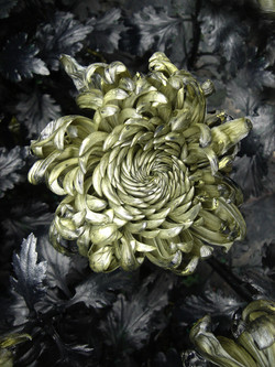 In Furious Bloom