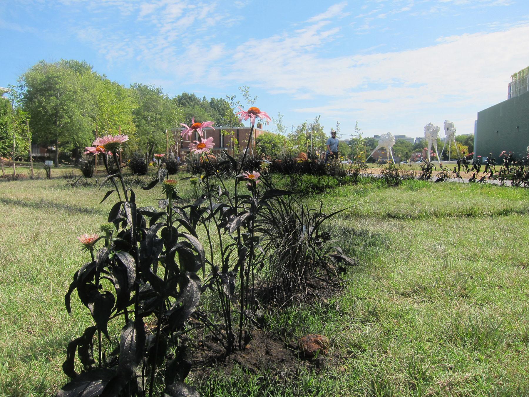 Alpha Lillstrom Portrait Garden