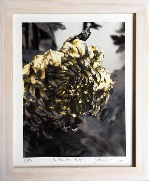 In Furious Bloom Limited Edition Pigment Print