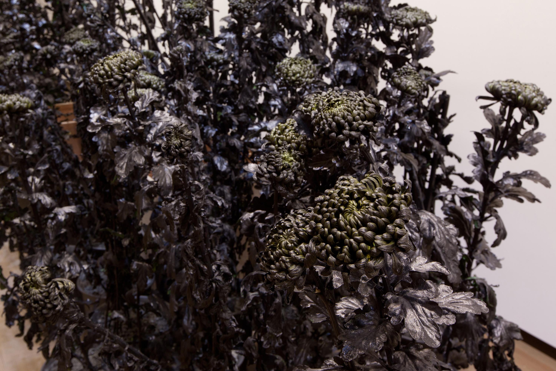 Inked Chrysanthemums