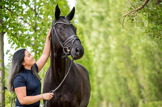 Ausbildung Pferdewirt