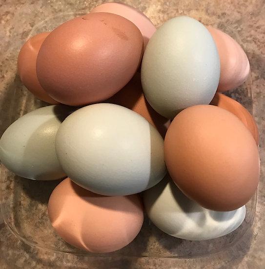 Free Range Eggs - One Dozen