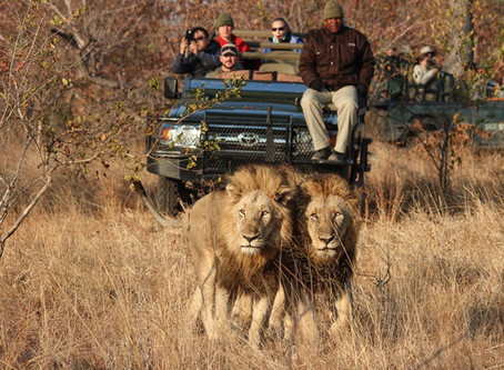 Episode 52: Luxury Safari Adventures in South Africa