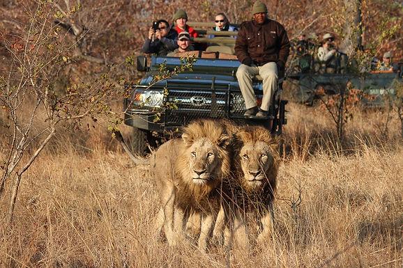 Episode 52: Luxury Safari Adventures in South Africa