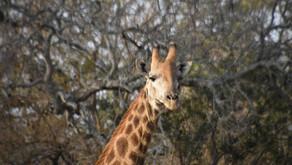 Where The Wild Things Roam - An African Adventure