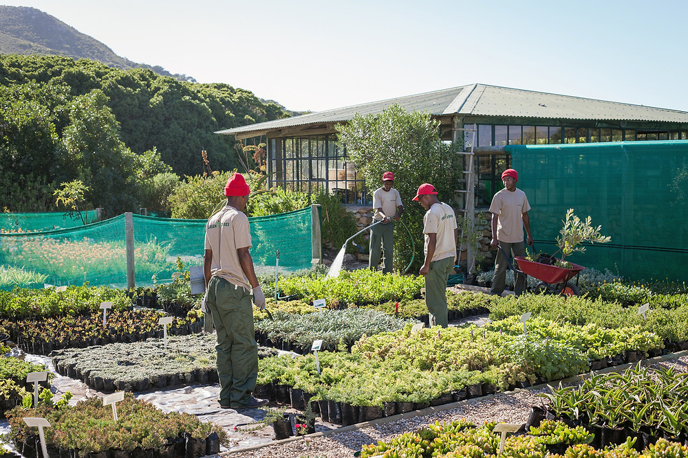 web-grootbos-foundation-green-futures-horticultural-30