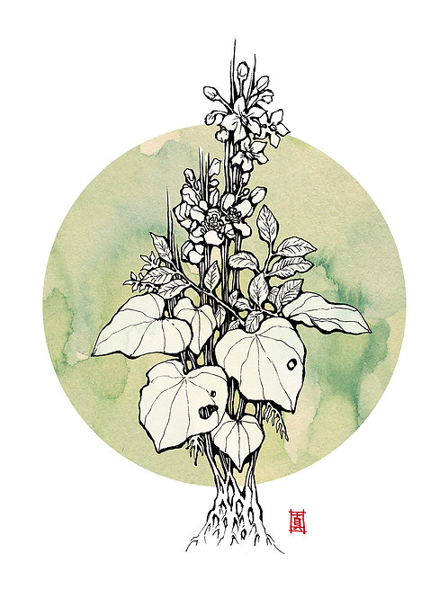 "A4 Print ""Mixed Plants"""