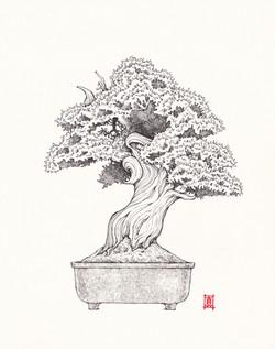 Bonsai Tree #1