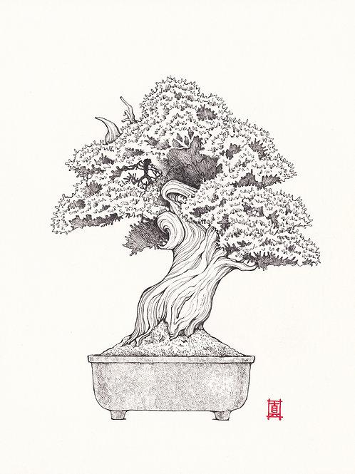 """A4 Print """"Bonsai Tree #1"""""""