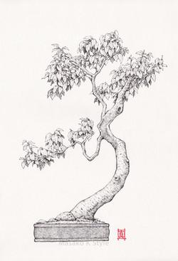Bonsai Tree #2