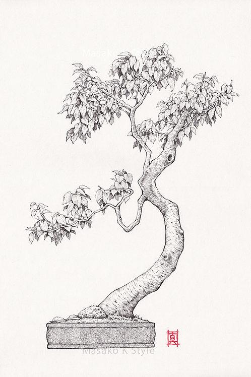 """A4 Print """"Bonsai Tree #2"""""""