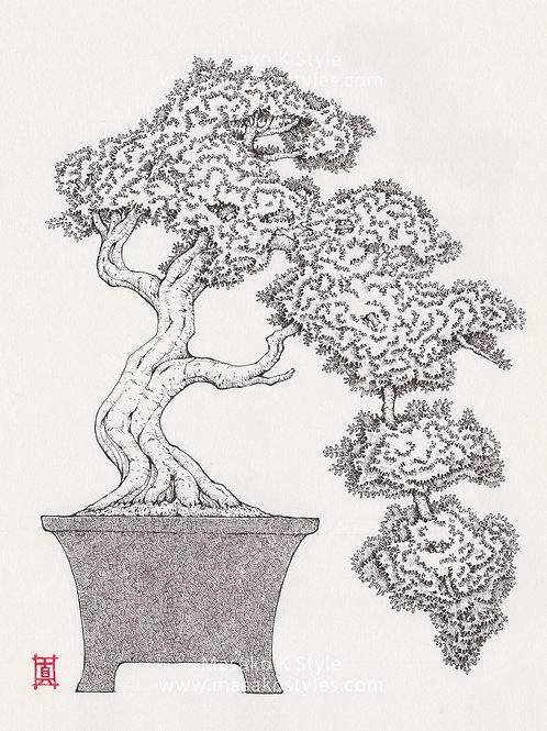 """A4 Print """"Bonsai Tree #3"""""""