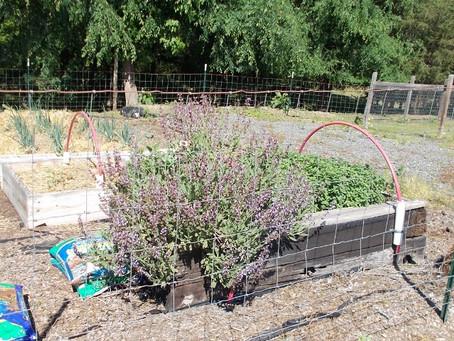 Gardening May 2016