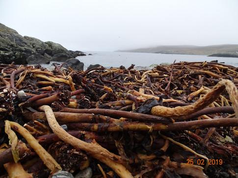 Winter Seaweed