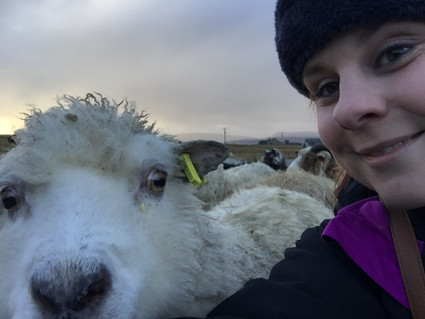 Photobombing by a Sheep!