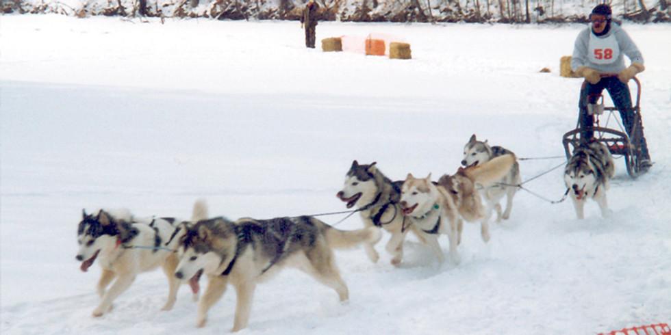 Dog Sled Run