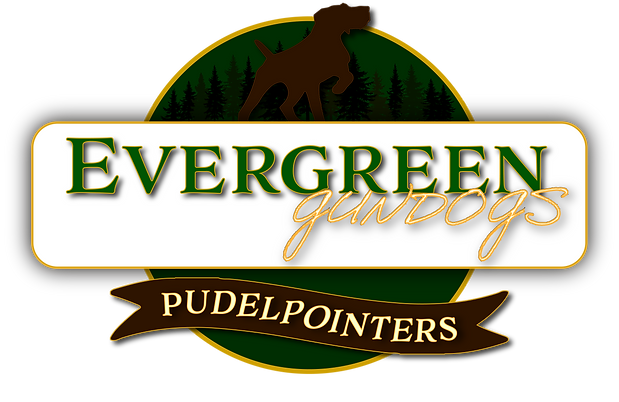 Evergreen real new logo copy png 555.png