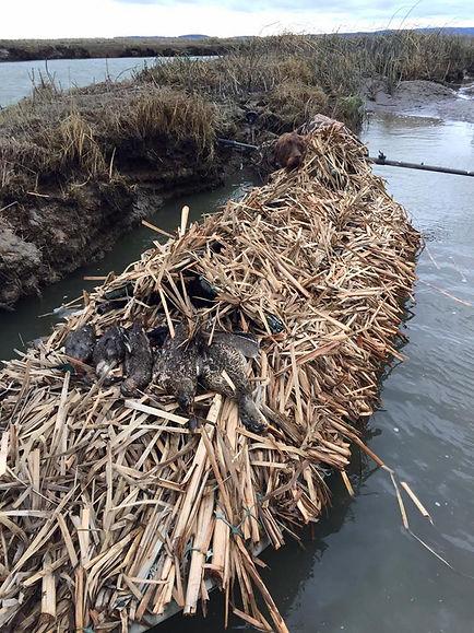 boat marsh.jpg