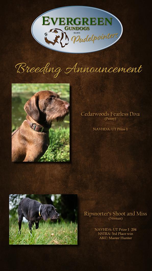 Breedingannouncement new-01.png