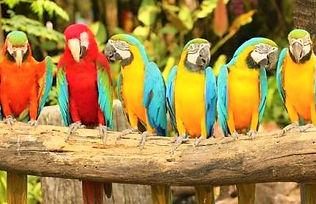 Park-ptic-na-Phukete.jpg