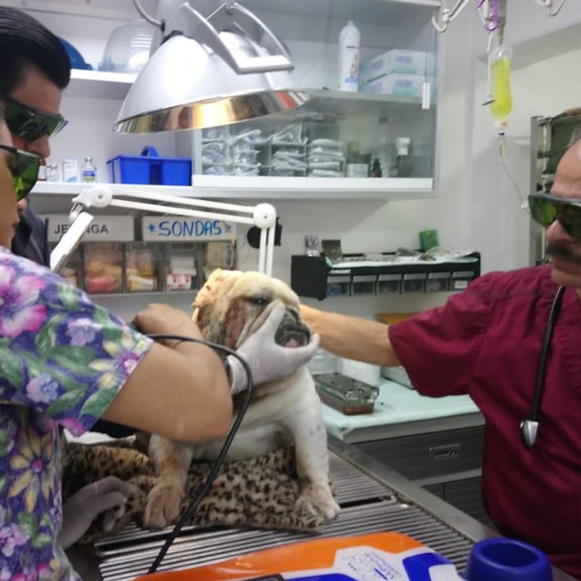 Uso de Láser Clase IV en Rehabilitación Veterinaria